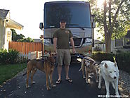 Full Time RVing with Large Dogs