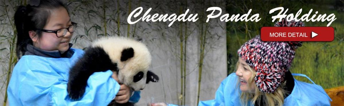 Headline for chengdu panda volunteer, chengdu panda holding