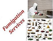 Fumigation Services For Home Improvement