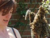 Sustainable Beekeeping | Beekeeping Courses | Natural Beekeeping Trust