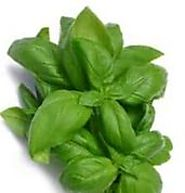 Health Benefits and Medicinal Uses of Eating Basil (Tulsi)