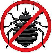 Bed Bug Pest Control Toronto