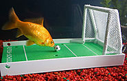 Fish Training Kit - White Elephant Gifts