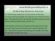 K9 Bed Bug Detection Services