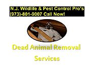 Dead Animal Removal Services