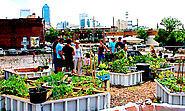Category: urban agriculture