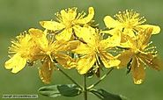 A meta-analysis on the efficacy and safety of St John's wort extra | NDT