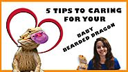 Baby Bearded Dragon Care - 5 Tips To Caring For Your Baby Bearded Dragon
