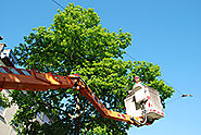 The Differences Between Certified Arborists and Tree Trimmers