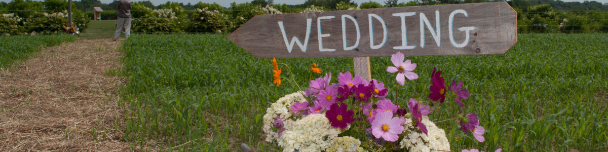 Headline for NorthForkWeddings & SouthForkWeddings - Inspiration for Weddings and Parties