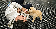 For the Scene Stealers of 'The Curious Incident,' a Happy Second Act, in Dog Years