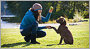 Professional Dog Training Services in the Area of Richmond Hill