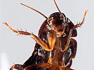 10 Things You Didn't Know About Cockroaches