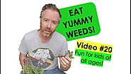 How to Pick Edible Weeds Fast and add them to your salads! Bush Tucker! Video #20