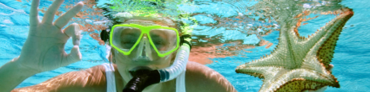 Headline for Ideal snorkelling places in sunshine coast – The Best Spots to Explore Underwater