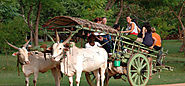Enjoy a Bullock Cart Ride