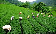 Attraction, Travel agents, Things To Do, Popular Places, Darjeeling India � VTripIndia