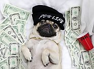 Home - MONEY PUG