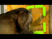 Cooperation and Fairness:Moral behaviour in Monkeys