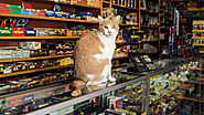 Felines At Work: New Book Celebrates Cats Who Call New York City's Shops Home