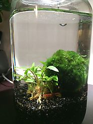 Build an Aquatic Ecosphere