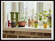 How to grow indoor plants successfully to make your home look appealing? by John Steffen