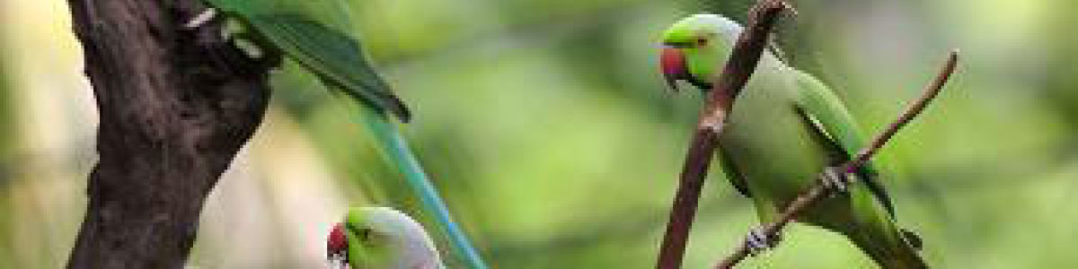 Headline for Top Bird Watching Sites in Sri Lanka: Experience the Flying Wonders
