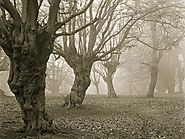 7 Haunted Forests Around the World