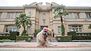 Airbnb Set Up Marnie the Dog in Her Very Own Pet-Friendly Beverly Hills Mansion