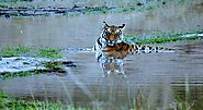 India Tiger Photography Tour Packages