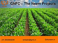 Uses of Neem Oil in Agriculture and Herbal Medicine