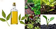 Neem Oil is known to be to a great useful and remedial