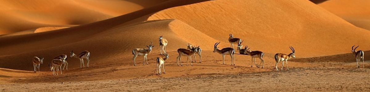Headline for Mammals in UAE – The Wild Side of UAE