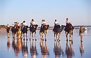 Ride a Camel on Cable Beach as The Sun is Making its Way Down