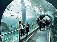 The Melbourne Aquarium