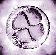 How many embryos should I have transferred?