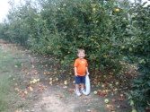 Where to Find Pick-Your-Own Fruit and Vegetable Farms / Orchards for Local, Fresh Fruit, Vegetables and Pumpkins, Alo...