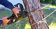 Hire a tree removal Melbourne expert and get complete insured assistance