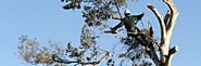 Know The Advantage of Tree Removal Process Melbourne