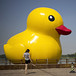 Photos: China's Big Yellow Ducks