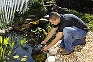Filtration Systems and Products for Your Fish Ponds