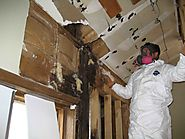 Steps to Prevent Mold Growth in Your Vacation Home