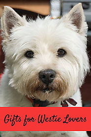 Gift Ideas for Westie Owners - Kims Five Things
