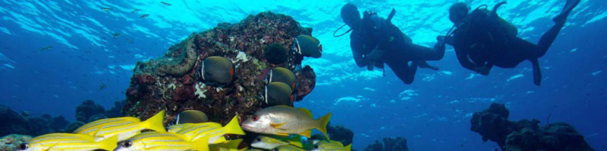 Headline for Marine Life in Maldives – The Bounty of the Indian Ocean