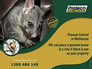 Safe and Sound Possum Removal in Melbourne