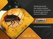 Safe & Effective Cockroach Control in Melbourne