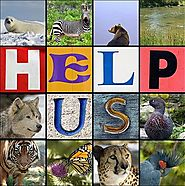 6 Ways To Help Endangered Species -