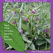 Make Comfrey Oil - It is a Carpel Tunnel Natural Remedy!