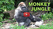 Miami Everglades RV Resort and the Monkey Jungle - Traveling Robert