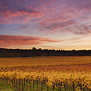 russian river valley wine tours from san francisco